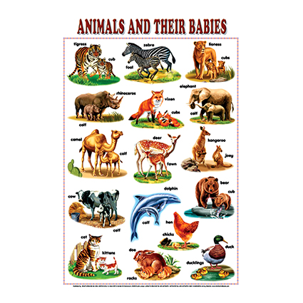 Animals & Their Babies